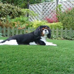 Artificial Grass - Pets 003