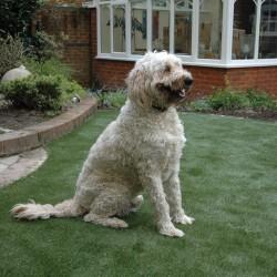 Artificial Grass - Pets 011