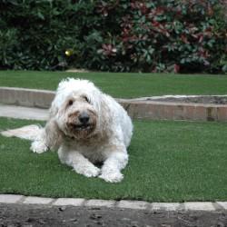 Artificial Grass - Pets 010