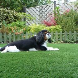 Artificial Grass - Pets 001