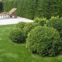 Artificial Grass 030