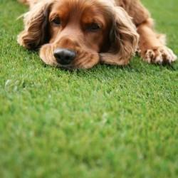 Artificial Grass - Pets 008